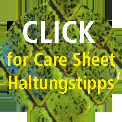 Care Sheet