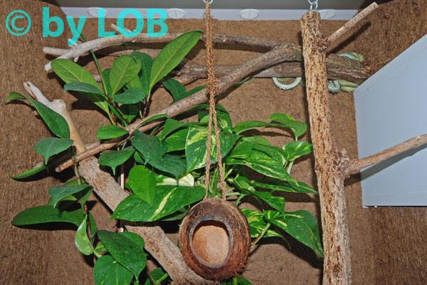 kleine geckos für terrarium