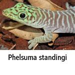 Phelsuma standingi