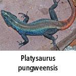 Platysaurus pungweensis